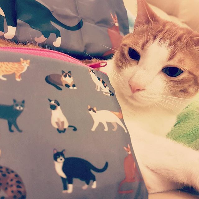 LOQI- MEOW tote bag HK$90 小貓多多也望到眼甘甘! Available at www.modmod.club  #totebag#travel#eco#ecobag#mod#modmod#modmodclub#catlovers#catlovers#museum#moma#disneyhk#fashion#hongkong#tst#fashion#pietmondrian#gifts#giftideas#vangogh#starrynight#hokusai#loqi_hk#monet#cats#dogs#pets#woof#meow#loqi#discoverhongkong#catshk